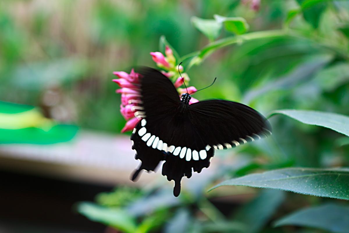 Schmetterlingsgarten